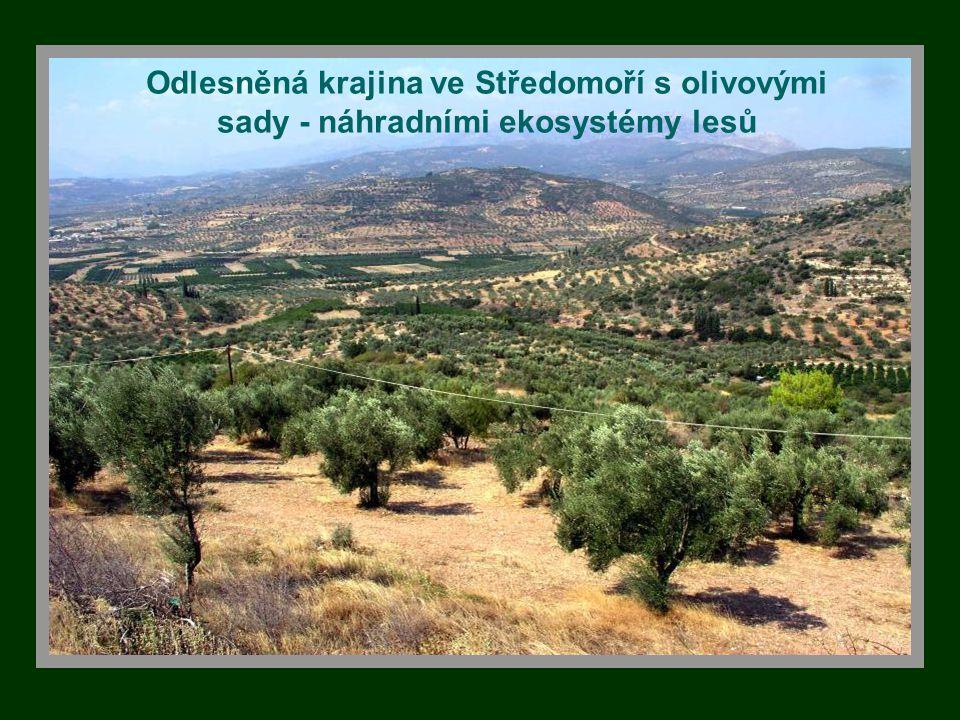 Odlesněná krajina ve Středomoří s olivovými