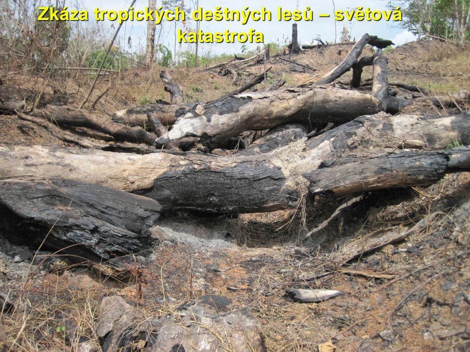 Zkáza tropických deštných lesů – světová katastrofa
