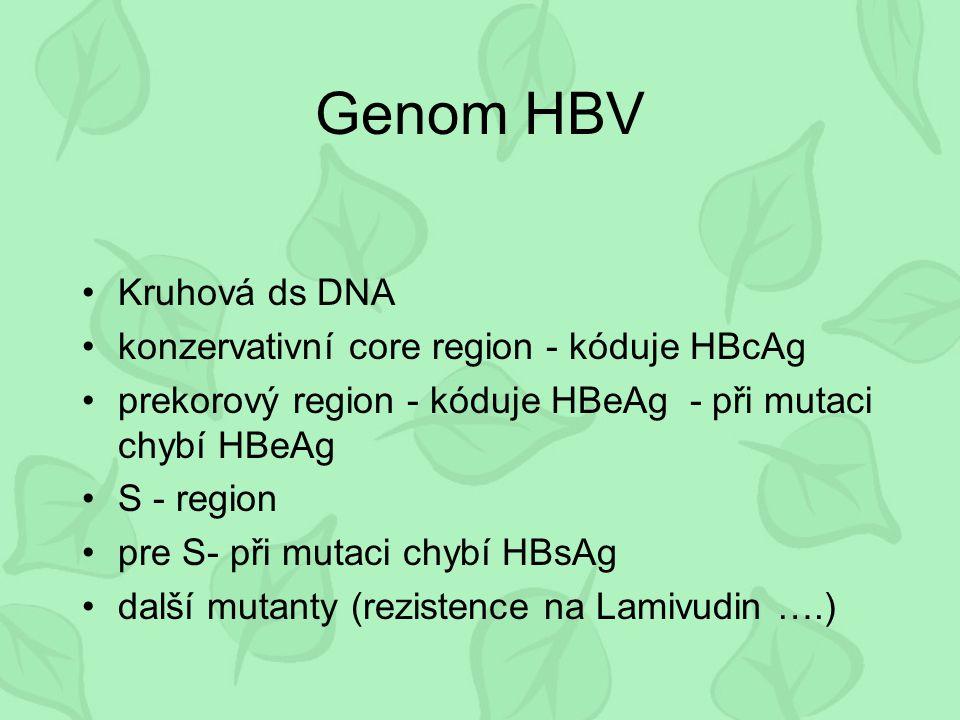 Genom HBV Kruhová ds DNA konzervativní core region - kóduje HBcAg