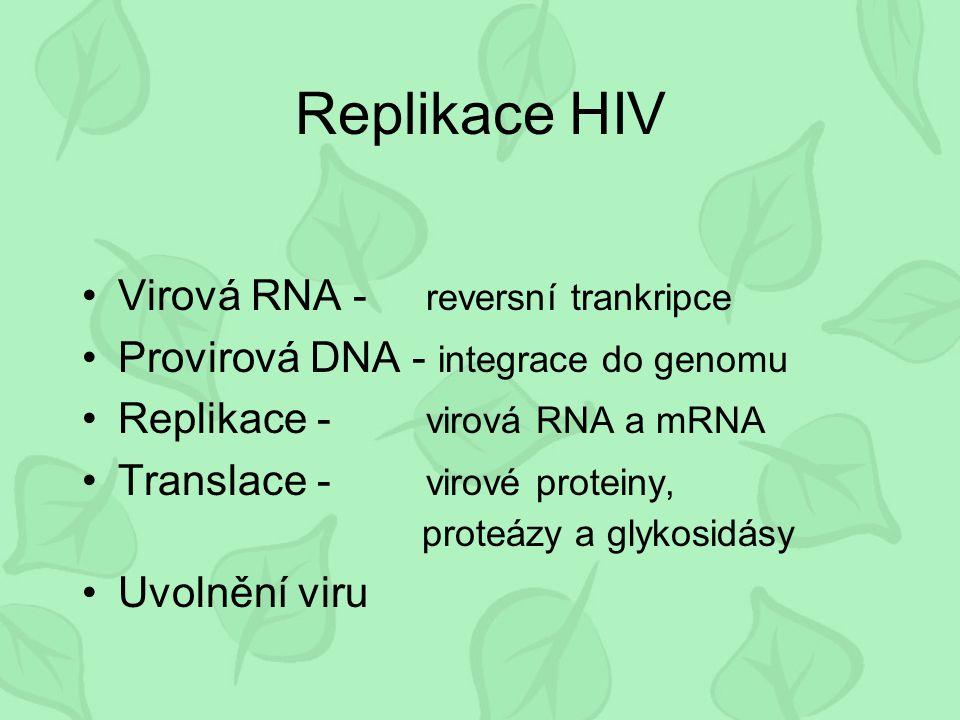 Replikace HIV Virová RNA - reversní trankripce