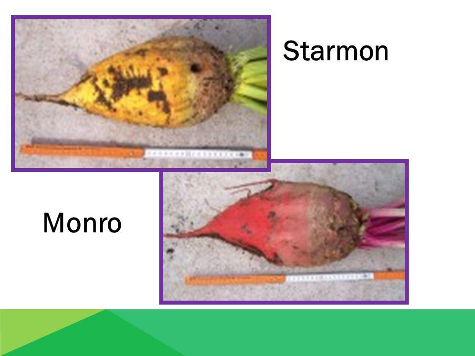 Starmon Monro Monro