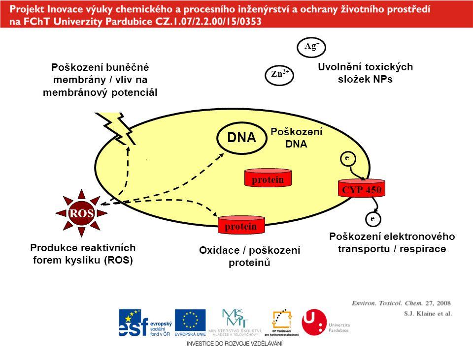 DNA ROS Poškození buněčné membrány / vliv na membránový potenciál