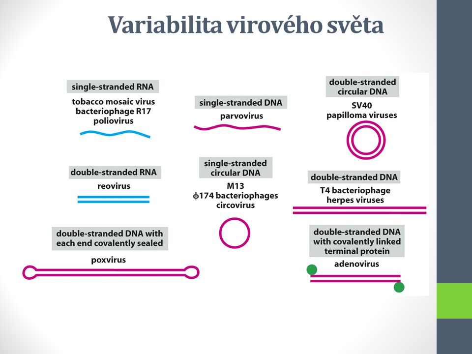 Variabilita virového světa