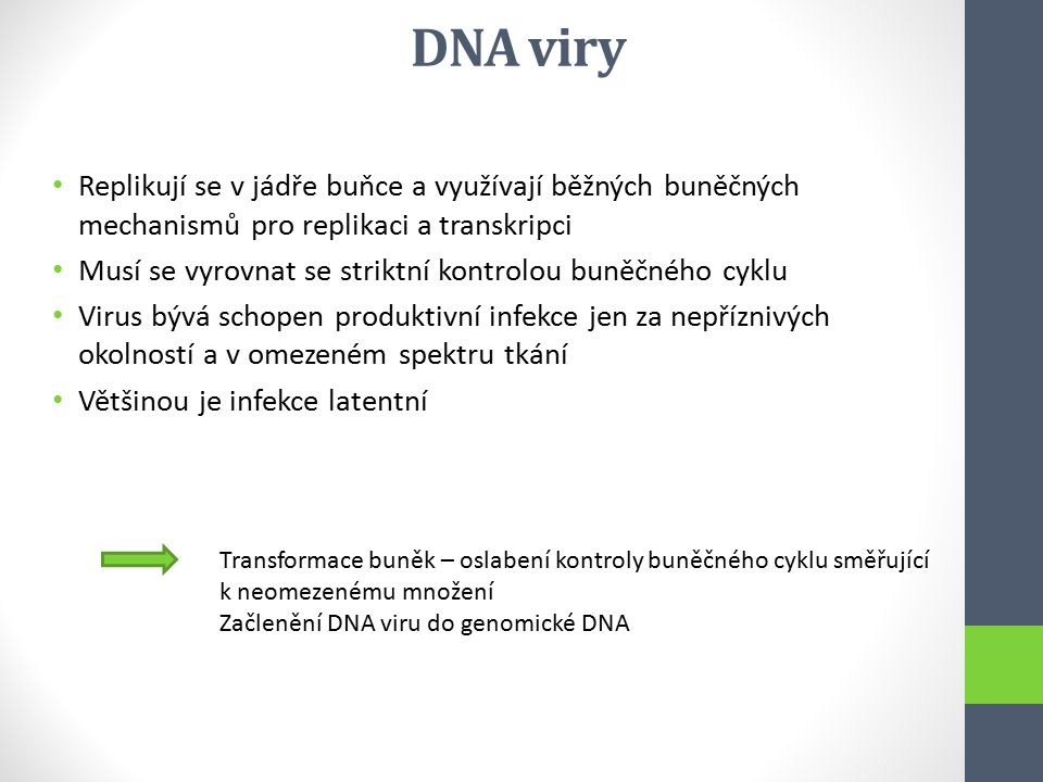 DNA viry Replikují se v jádře buňce a využívají běžných buněčných mechanismů pro replikaci a transkripci.