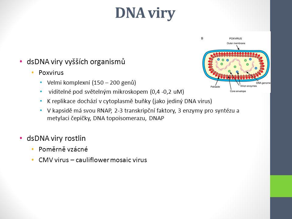 DNA viry dsDNA viry vyšších organismů dsDNA viry rostlin Poxvirus