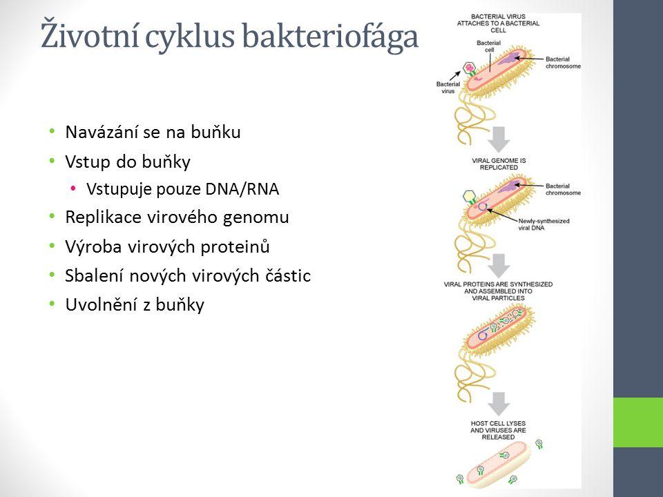 Životní cyklus bakteriofága