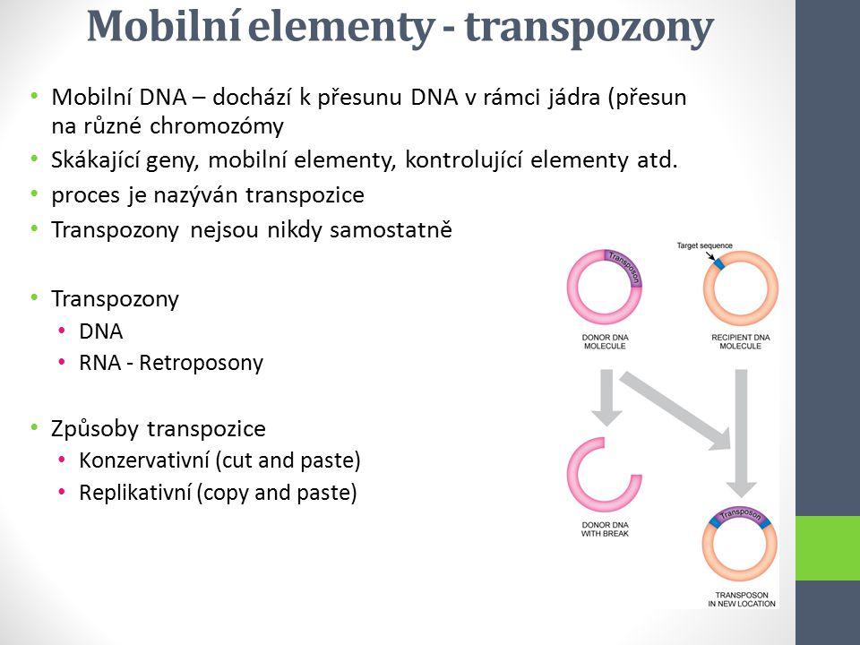 Mobilní elementy - transpozony