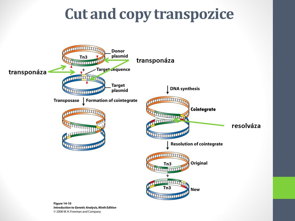 Cut and copy transpozice