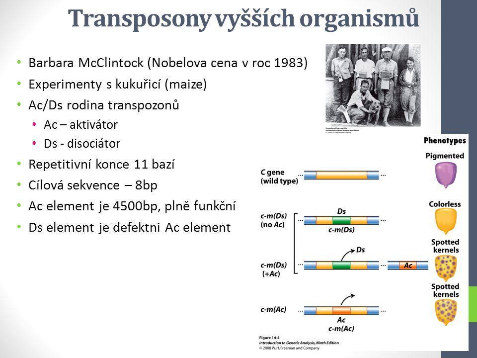 Transposony vyšších organismů