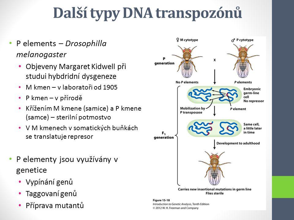 Další typy DNA transpozónů