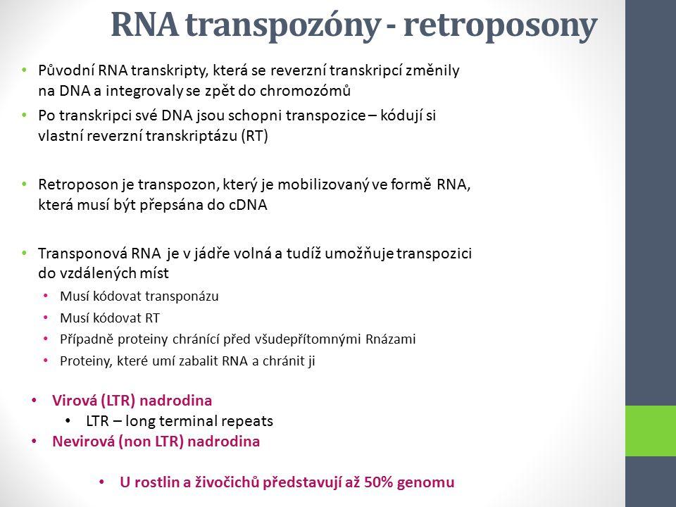 RNA transpozóny - retroposony