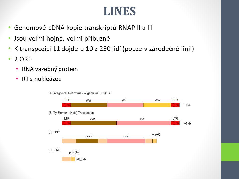 LINES Genomové cDNA kopie transkriptů RNAP II a III