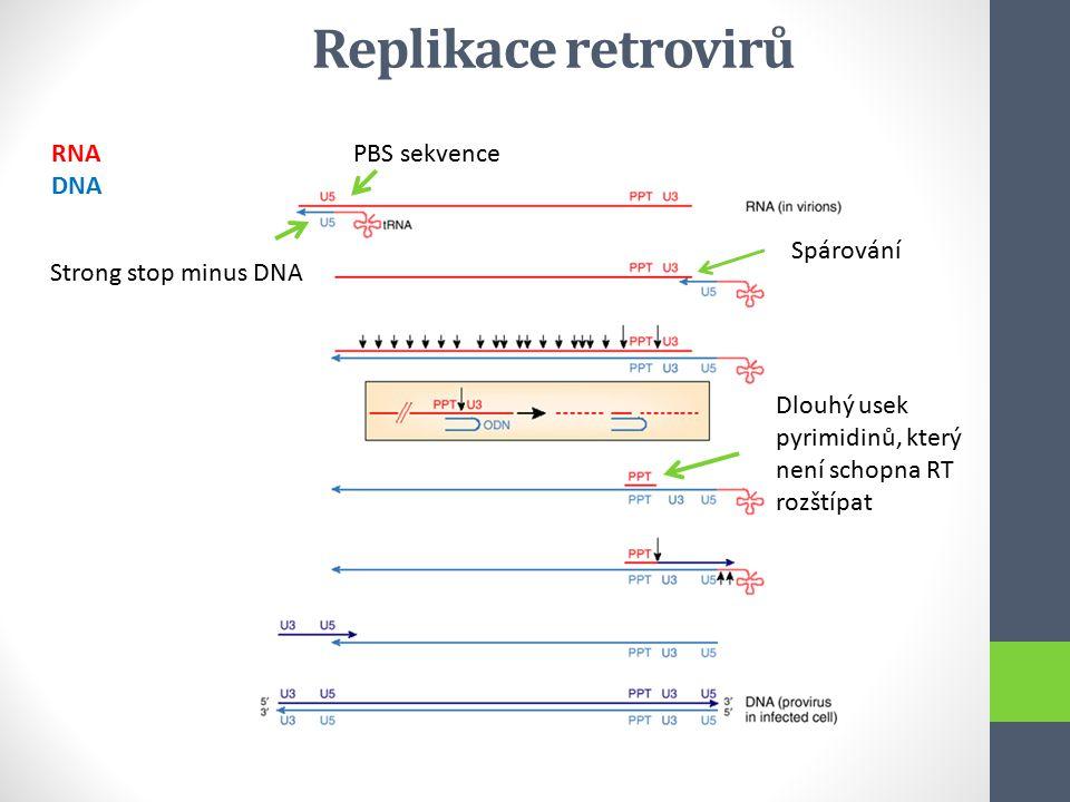 Replikace retrovirů RNA DNA PBS sekvence Spárování