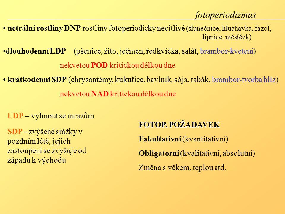 fotoperiodizmus netrální rostliny DNP rostliny fotoperiodicky necitlivé (slunečnice, hluchavka, fazol, lipnice, měsíček)