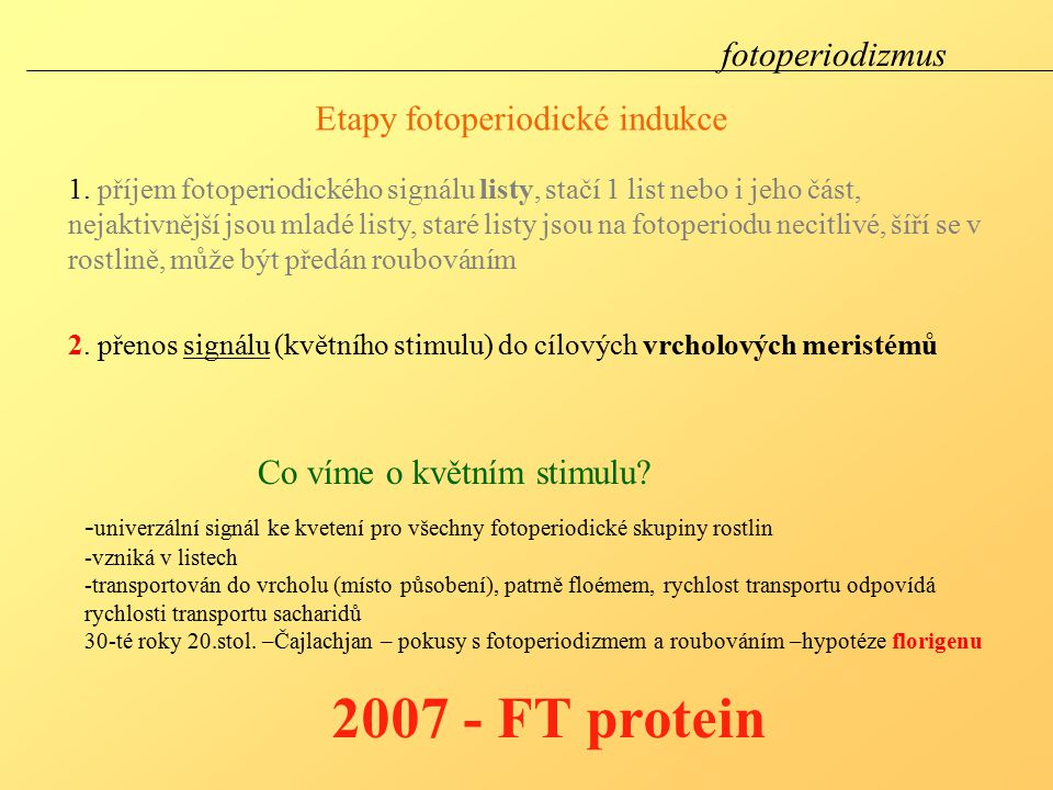 2007 - FT protein fotoperiodizmus Etapy fotoperiodické indukce