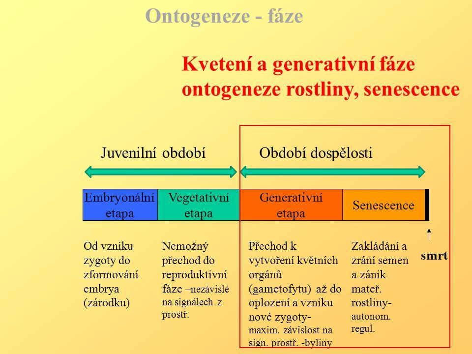 Kvetení a generativní fáze ontogeneze rostliny, senescence
