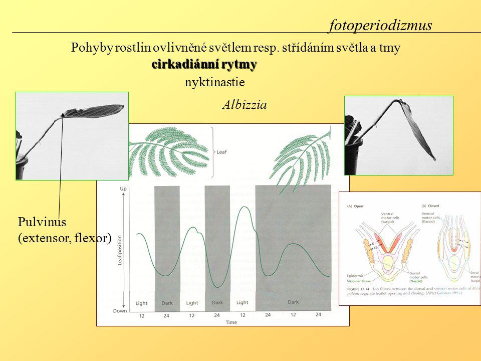 fotoperiodizmus Pohyby rostlin ovlivněné světlem resp. střídáním světla a tmy. cirkadiánní rytmy. nyktinastie.