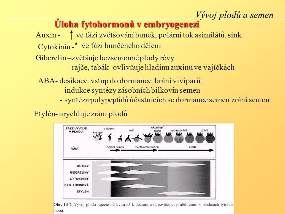 Úloha fytohormonů v embryogenezi