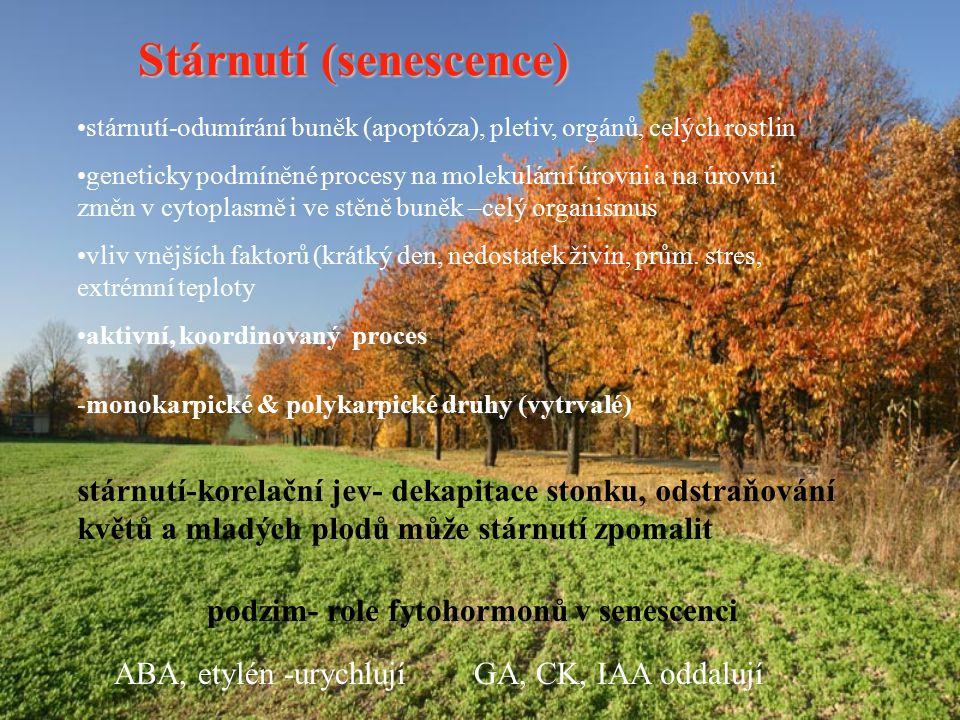 podzim- role fytohormonů v senescenci