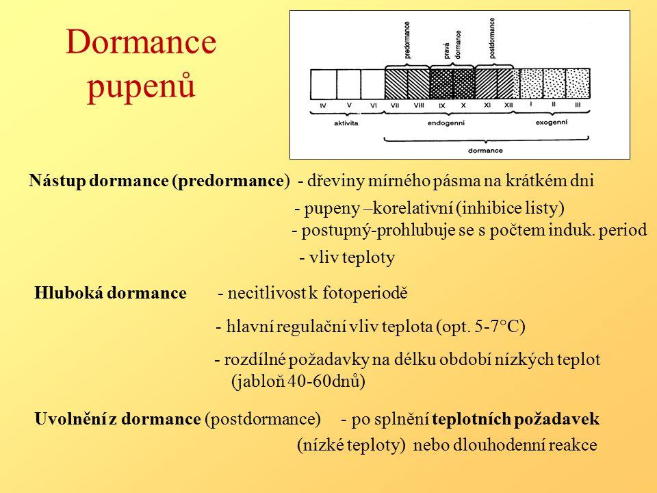 Dormance pupenů Nástup dormance (predormance) - dřeviny mírného pásma na krátkém dni.
