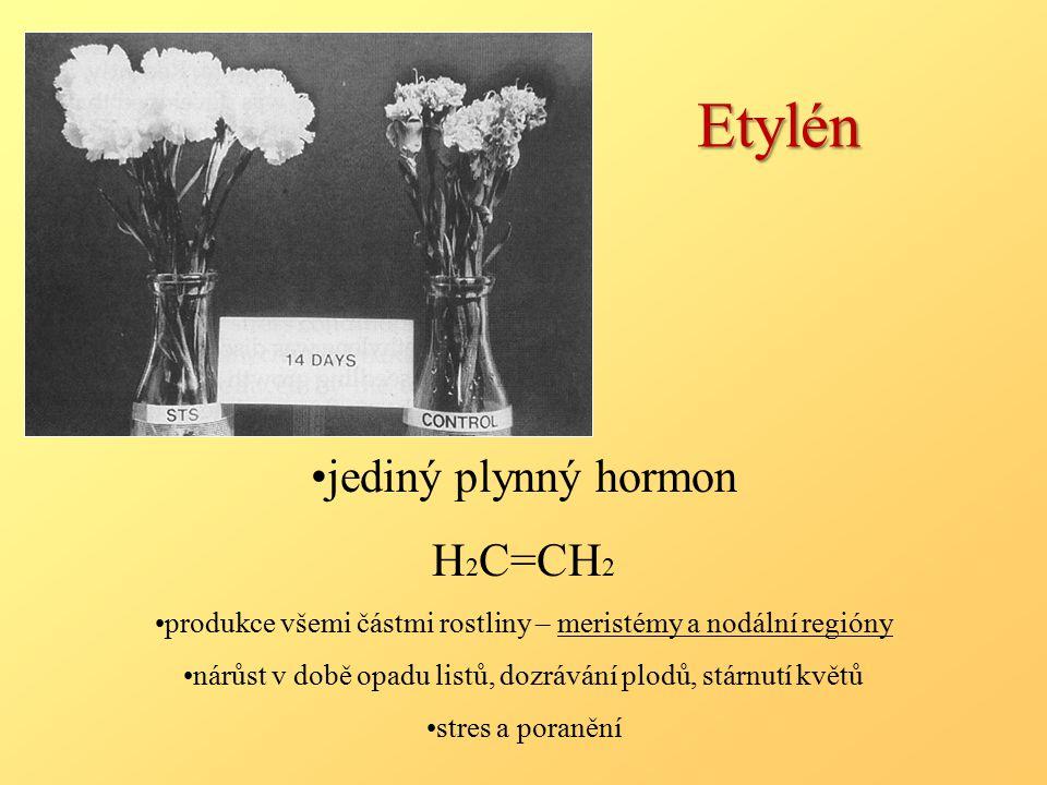 Etylén jediný plynný hormon H2C=CH2