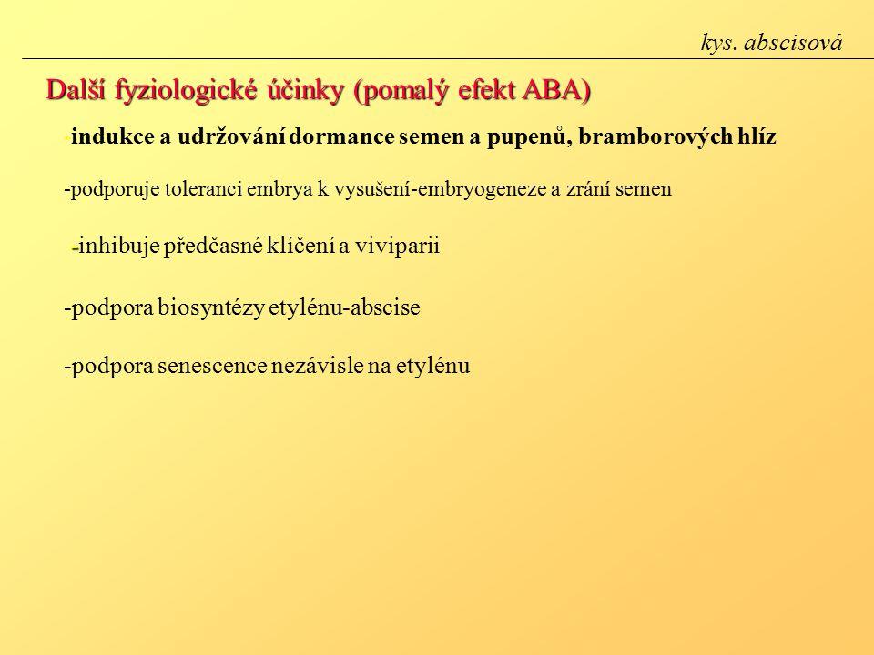 Další fyziologické účinky (pomalý efekt ABA)
