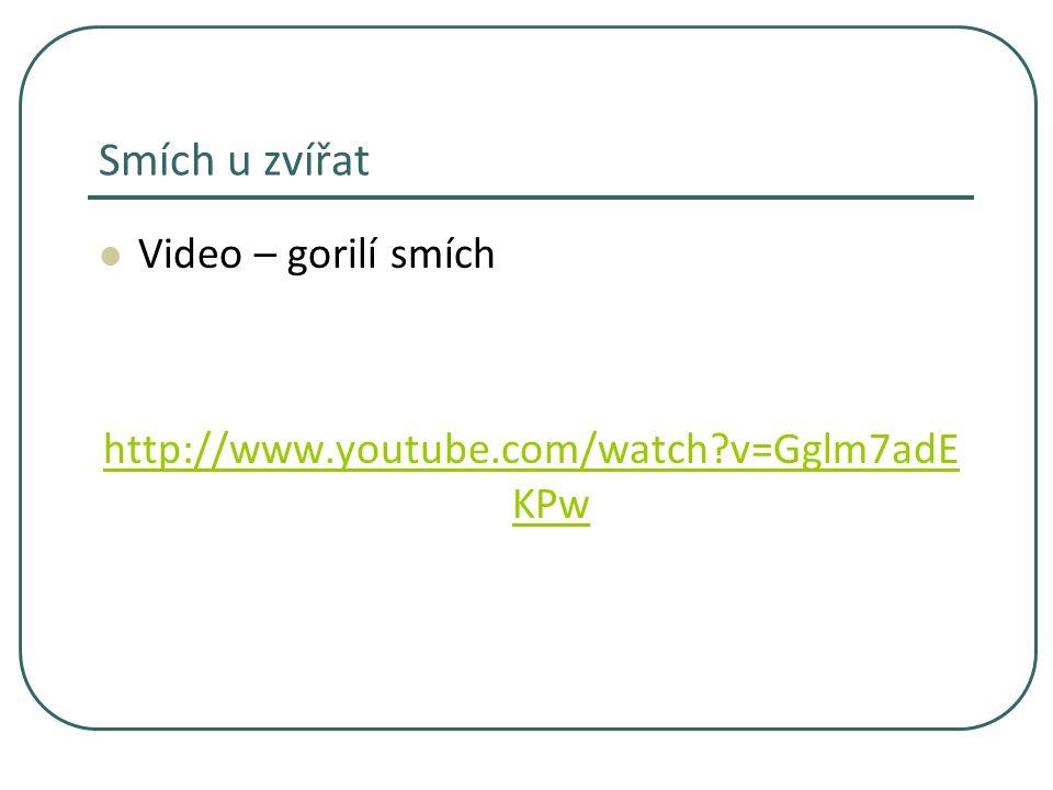 Smích u zvířat Video – gorilí smích