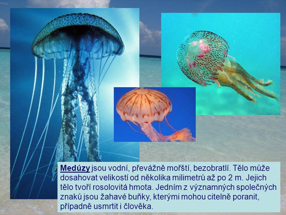 Medúzy jsou vodní, převážně mořští, bezobratlí
