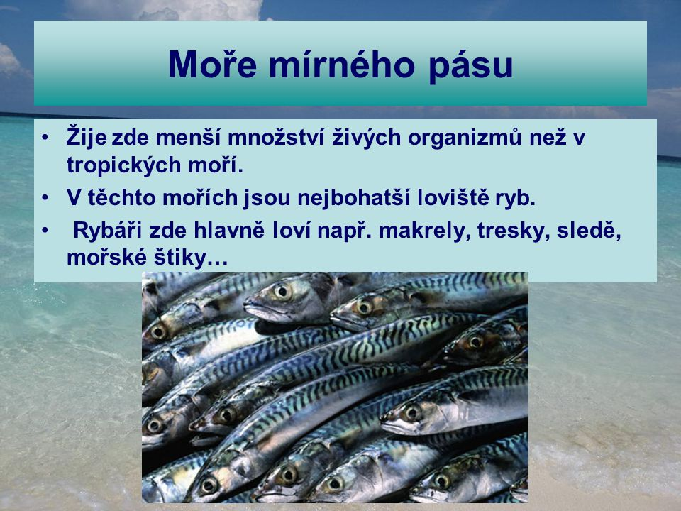 Moře mírného pásu Žije zde menší množství živých organizmů než v tropických moří. V těchto mořích jsou nejbohatší loviště ryb.