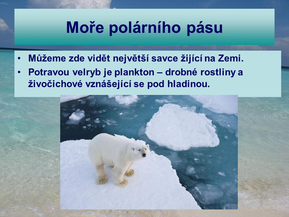 Moře polárního pásu Můžeme zde vidět největší savce žijící na Zemi.