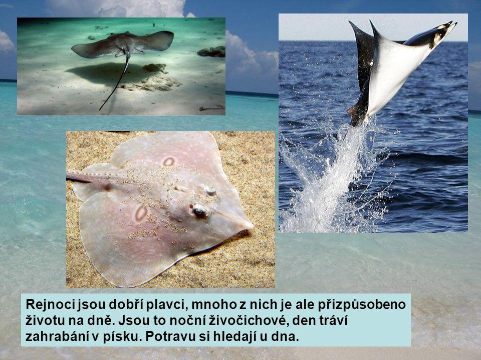Rejnoci jsou dobří plavci, mnoho z nich je ale přizpůsobeno životu na dně.
