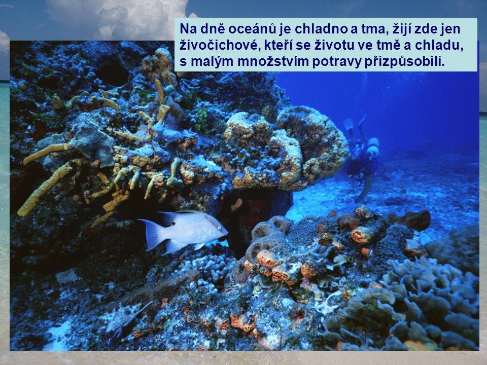 Na dně oceánů je chladno a tma, žijí zde jen živočichové, kteří se životu ve tmě a chladu, s malým množstvím potravy přizpůsobili.