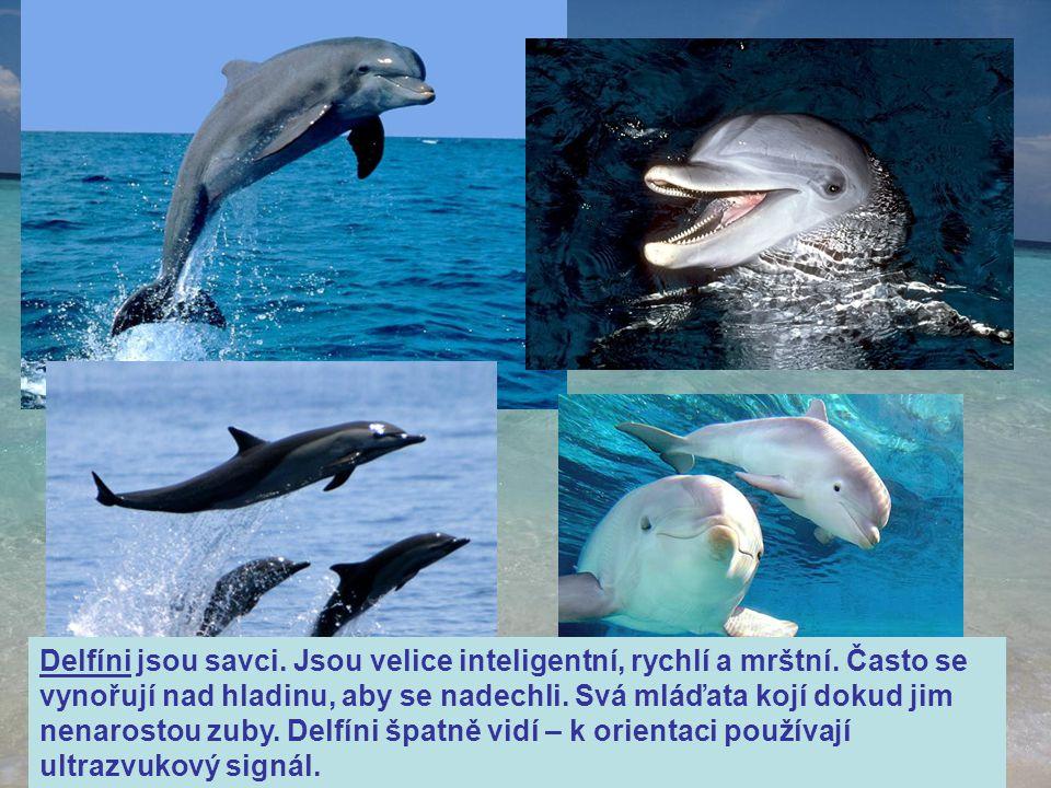 Delfíni jsou savci. Jsou velice inteligentní, rychlí a mrštní
