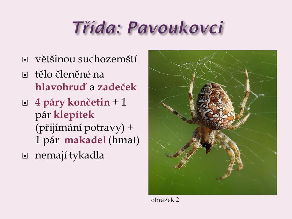 Třída: Pavoukovci většinou suchozemští