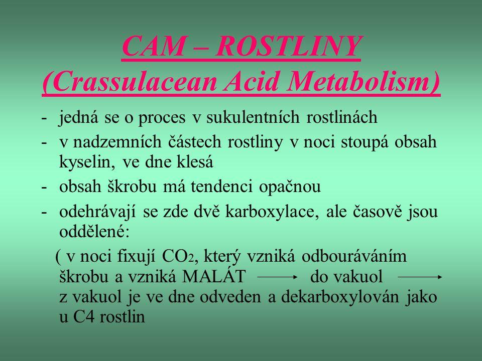 CAM – ROSTLINY (Crassulacean Acid Metabolism)