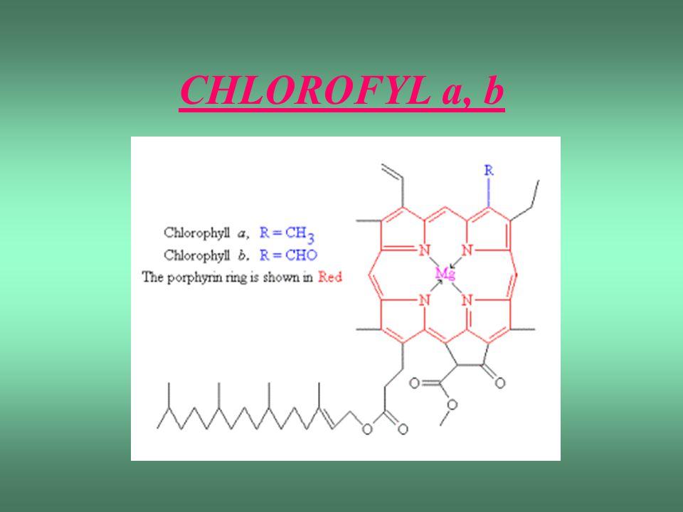 CHLOROFYL a, b