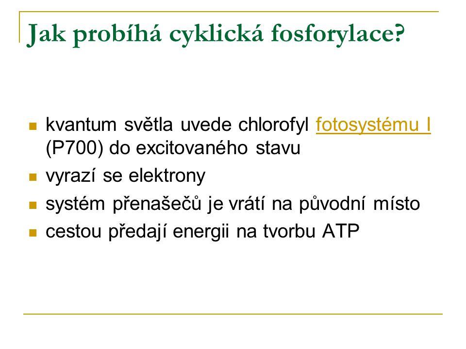 Jak probíhá cyklická fosforylace