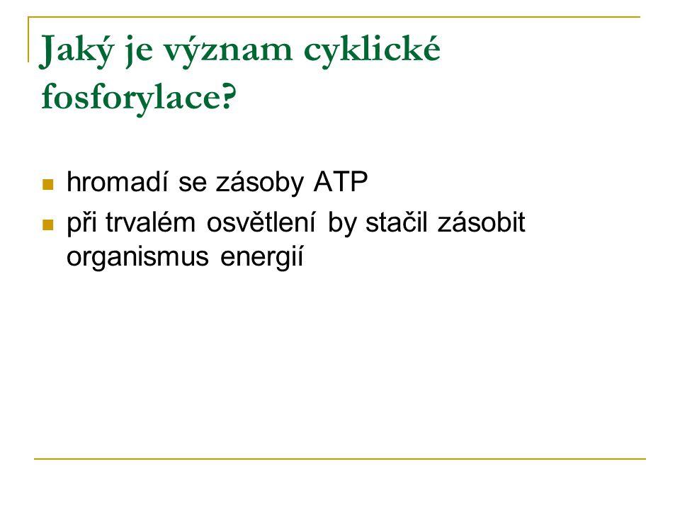 Jaký je význam cyklické fosforylace