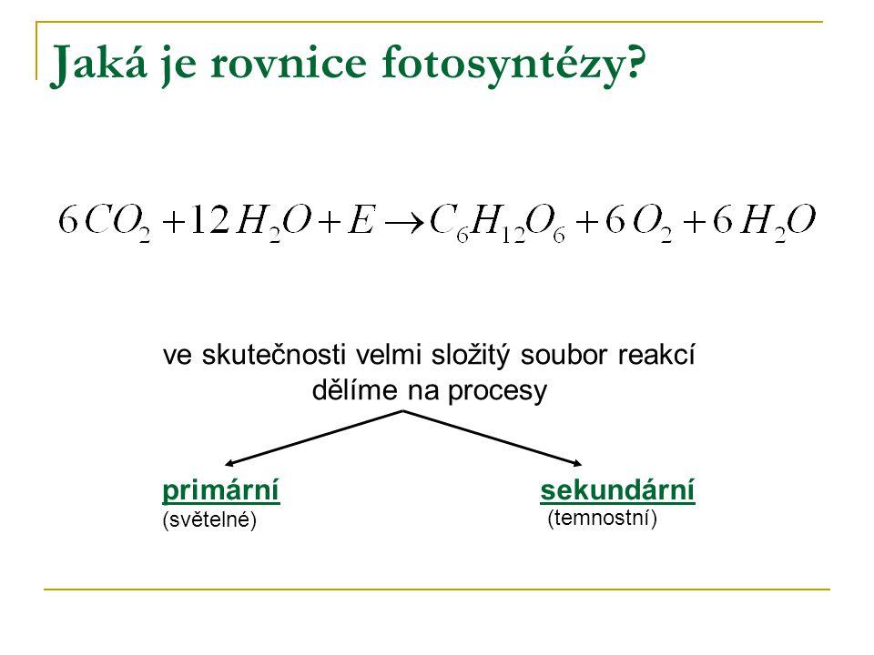 Jaká je rovnice fotosyntézy
