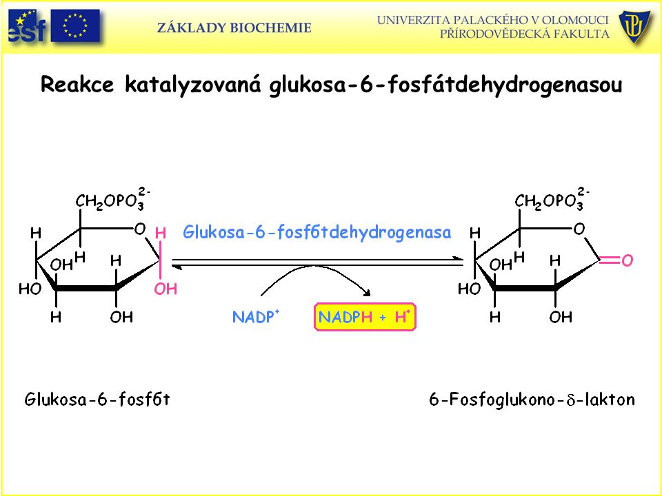 Reakce katalyzovaná glukosa-6-fosfátdehydrogenasou