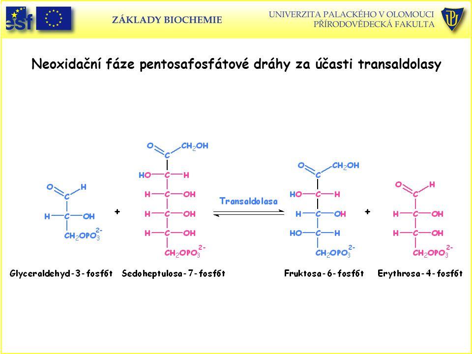 Neoxidační fáze pentosafosfátové dráhy za účasti transaldolasy