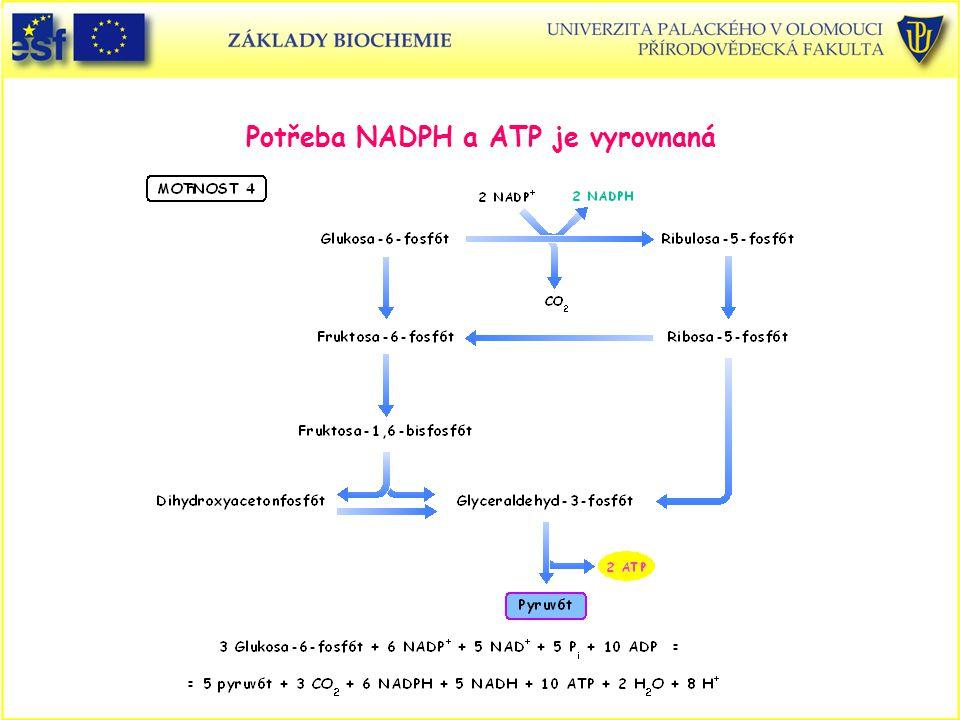 Potřeba NADPH a ATP je vyrovnaná