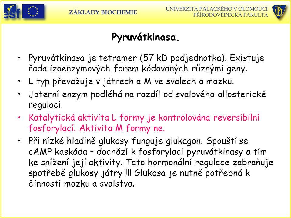 Pyruvátkinasa. Pyruvátkinasa je tetramer (57 kD podjednotka). Existuje řada izoenzymových forem kódovaných různými geny.