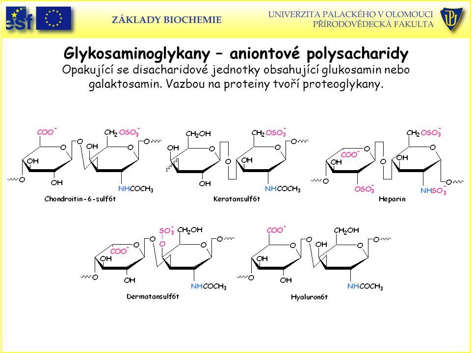 Glykosaminoglykany – aniontové polysacharidy Opakující se disacharidové jednotky obsahující glukosamin nebo galaktosamin. Vazbou na proteiny tvoří proteoglykany.