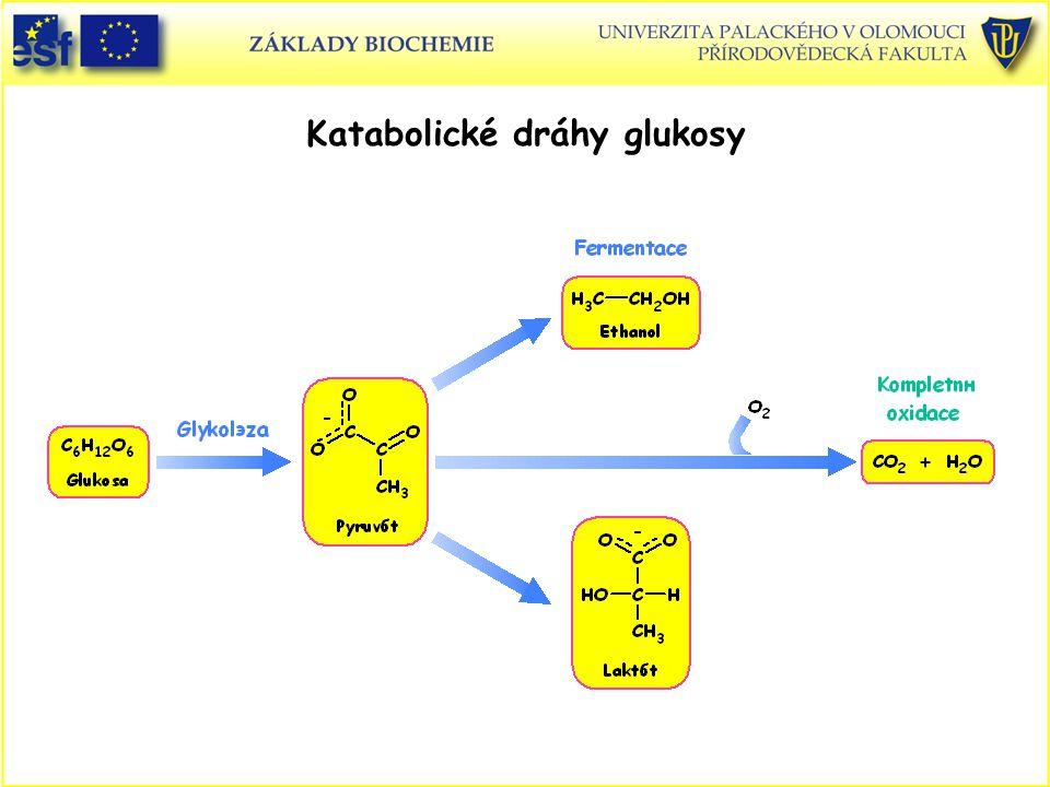 Katabolické dráhy glukosy