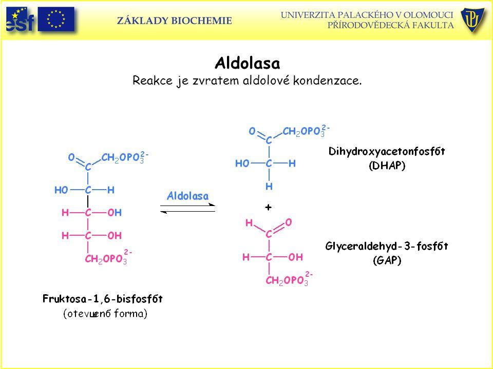 Aldolasa Reakce je zvratem aldolové kondenzace.