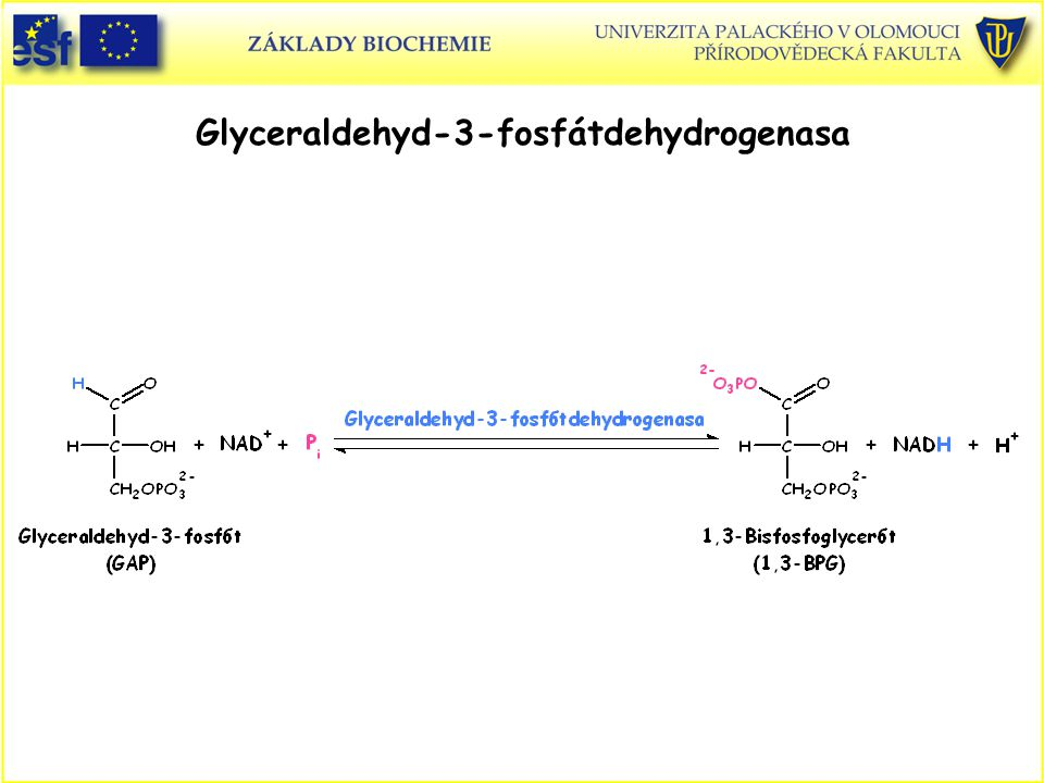 Glyceraldehyd-3-fosfátdehydrogenasa
