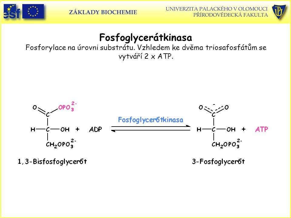 Fosfoglycerátkinasa Fosforylace na úrovni substrátu