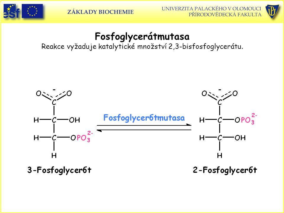 Fosfoglycerátmutasa Reakce vyžaduje katalytické množství 2,3-bisfosfoglycerátu.
