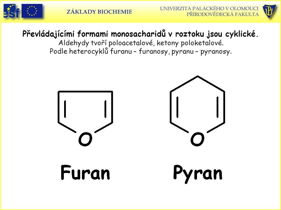 Převládajícími formami monosacharidů v roztoku jsou cyklické